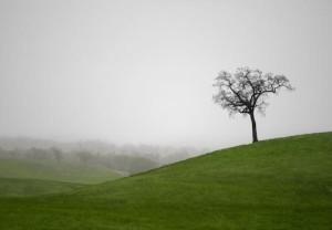 lone tree - california
