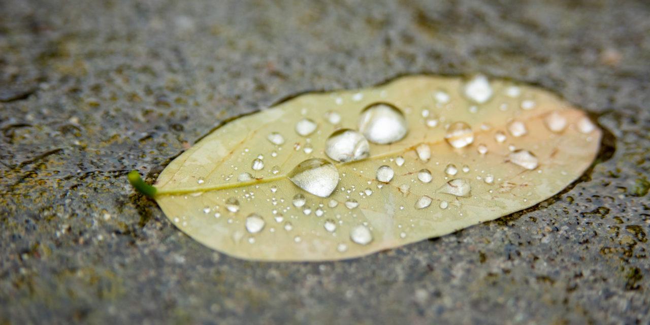 Fall has started in Spokane